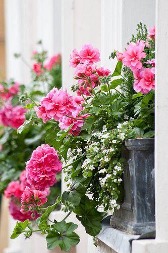 ideas_arreglos_florales_verano_geranio_9