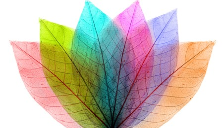 Paleta de colores para interiores tattoo design bild - Paletas de colores para interiores ...