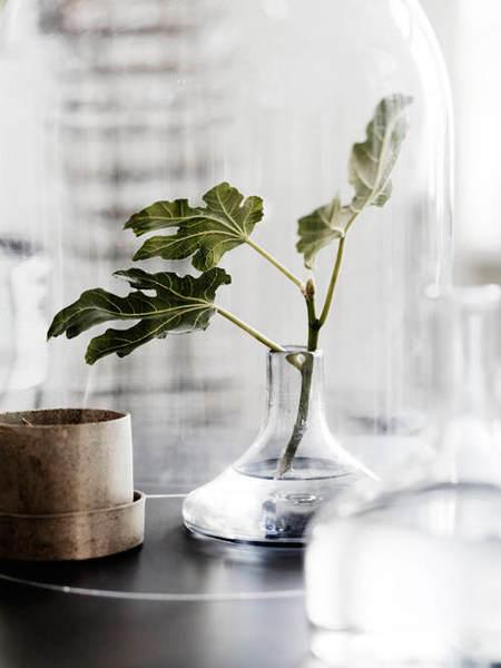 decorar_plantas_motivos_vegetales_12