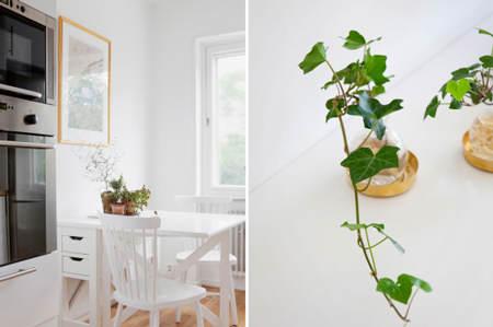 decorar_plantas_motivos_vegetales_2