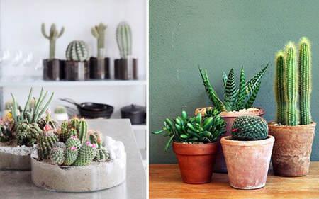 decorar_con_cactus_12