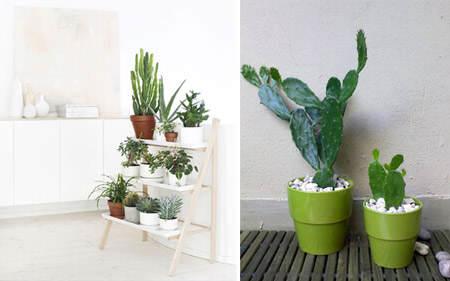 decorar_con_cactus_17