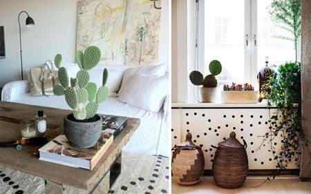 decorar_con_cactus_19