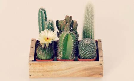decorar_con_cactus_20