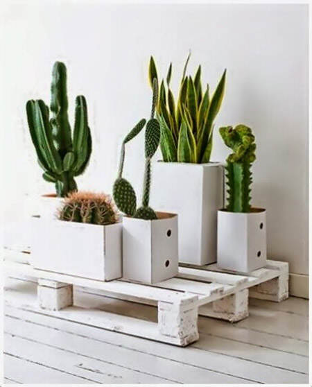 ideas para decorar con cactus el blog de due home el. Black Bedroom Furniture Sets. Home Design Ideas