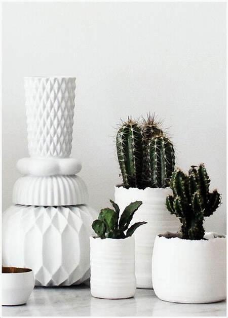 decorar_con_cactus_25