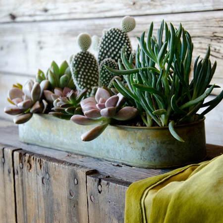 decorar_con_cactus_3