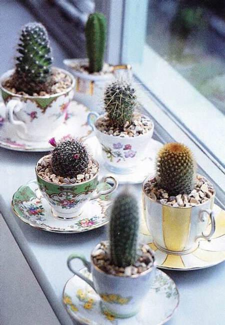decorar_con_cactus_6