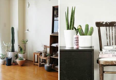decorar_con_cactus_7