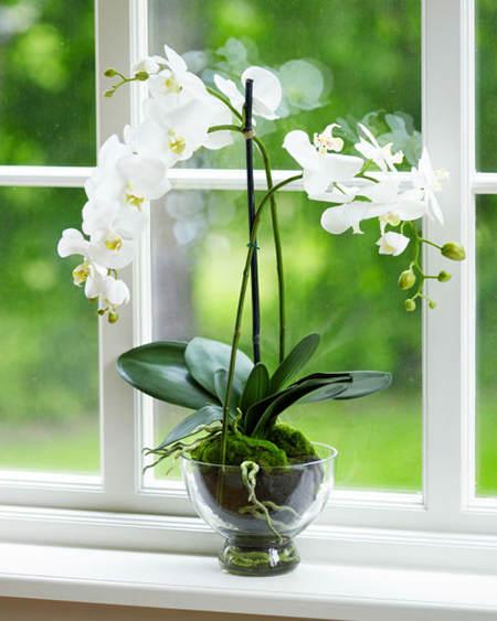 54f38555cf366_-_rbk-lasting-plants-orchids-s2