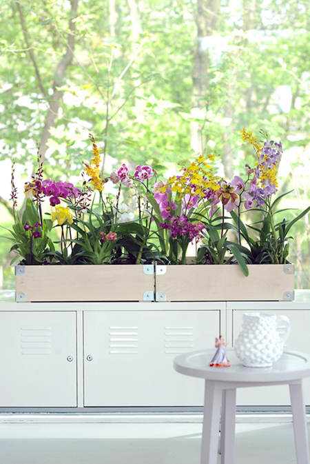 Modern_various-orchids_cheerful