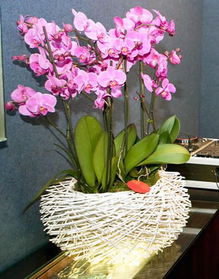 arreglos-florales-con-orquideas2