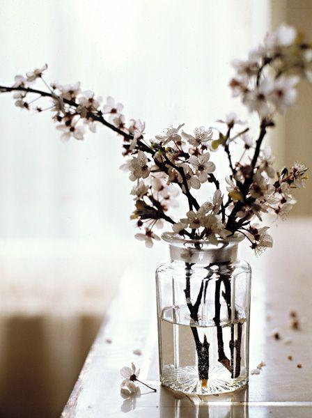 flores_primavera_5