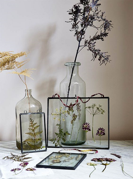 plantas y flores enmarcadas
