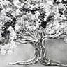 Árbol copa Plata